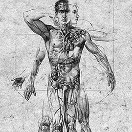 illustration of Male anatomy illustration for pharmaceutical client