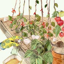 illustration of Collage, Painterly, Watercolor, Botanical, Editorial, Food, Agriculture, Food/Beverage, Lifestyle, Environmental