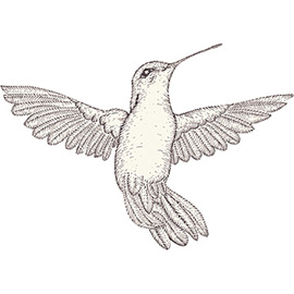 illustration of hummingbird, bird, spring, line art, pen and ink, happiness, hope, peace, nature, wildlife