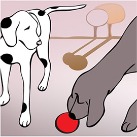 illustration of Dogs play with the ball. Dogs,  animals, Dalmatian, pets, tree, red ball,  available for Iphone, Ipad, dog magazine, logo, t-shirt, greeting card, dog products, dog accessories, dog supplies, dog publishing