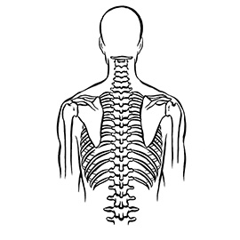 illustration of Pharmaceutical health and wellness drawing of spine, shoulder blades, ribs. Black ink drawing.