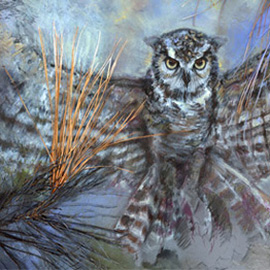 illustration of Owl, Nature, Eyes, Feathers, Flight, Alaska, Trees, Forestry,birds, fowl