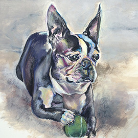 illustration of Pets, Animals, Boston Terrier, Terrier, Dog, Hobbies, Leisure, Ball, Toys, ears