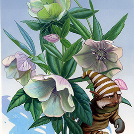 illustration of gnome, botanical, hellebore, flowers, snow, winter, fantasy, invented characters