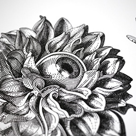 illustration of Black & White, Line, Pen & Ink, Whimsical, Feminine