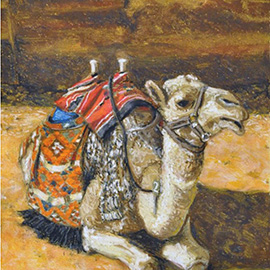 illustration of A bedouin camel used for travel through Petra in Jordan.