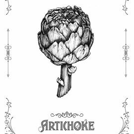 illustration of Detailed ink drawing of an artichoke