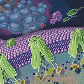 illustration of Conceptual editorial illustration showing the deficiency of cloride ion transport in Cystic Fibrosis, causing a cascade of body events including mucus buildup leading to bacterial infections (lungs).
