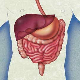 illustration of Digestive system graphic used for an advertising poster on IBS.